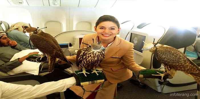 Penerbangan khusus, bisa membawa peliharaan dipesawat