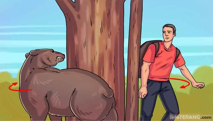 Cara Menghadapi Beruang yang Agresif